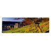 iCanvas Panoramic Church on a Landscape, Rievaulx Abbey, North Yorkshire, England, United Kingdom Photographic Print on Canvas