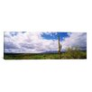 iCanvas Panoramic Cactus in a Desert, Saguaro National Monument, Tucson, Arizona Photographic Print on Canvas