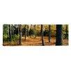 iCanvas Panoramic Chestnut Ridge Park Orchard Park New York Photographic Print on Canvas