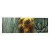 iCanvas Panoramic Cactus Plants Photographic Print on Canvas