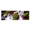 iCanvas Panoramic Cascading Waterfall in a Rainforest, Olympic National Park, Washington State Photographic Print on Canvas