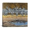 iCanvas 'Zebras' by Harro Maass Graffiti Graphic Art on Canvas