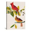 iCanvas 'Cardinal' by John James Audubon Graphic Art on Canvas