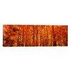 iCanvas Panoramic Aspen Trees at Sunrise Photographic Print on Canvas