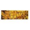 iCanvas Panoramic Aspen Trees in Autumn, Colorado, USA Photographic Print on Canvas