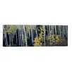iCanvas Panoramic Aspen Trees in a Forest, Aspen, Pitkin County, Colorado, USA Photographic Print on Canvas