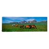 iCanvas Panoramic Horses Standing and Grazing in a Meadow, Borgarfjordur, Iceland Photographic Print on Canvas