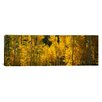 iCanvas Panoramic Aspen Trees in a Forest, Telluride, San Miguel County, Colorado, USA Photographic Print on Canvas