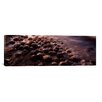 iCanvas Panoramic Horseshoe Crabs, Spawning, Port Mahon, Delaware River Delaware Photographic Print on Canvas