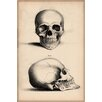 iCanvas Cartography 'Human Skull Engraving' by William Miller Graphic Art on Canvas