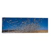 iCanvas Panoramic Flock of Snow Geese Flying at Bosque Del Apache National Wildlife Reserve, New Mexico Photographic Print on Canvas
