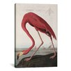 iCanvas 'Flamingo Drinking at Water's Edge' by John James Audubon Painting Print on Canvas