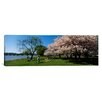 iCanvas Panoramic Cherry Blossoms, Washington DC Photographic Print on Canvas