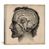 """iCanvas """"Head Anatomical Drawing"""" Canvas Wall Art by Jean-Baptiste Marc Bourgery"""
