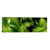 iCanvas Panoramic 'Fern' Photographic Print on Canvas