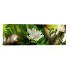 iCanvas Panoramic 'Fern with Magnolia' Photographic Print on Canvas
