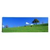 iCanvas Panoramic Cows, Canton Zug, Switzerland Photographic Print on Canvas