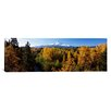 iCanvas Panoramic Mt. Hood National Forest, Oregon Photographic Print on Canvas