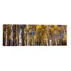 iCanvas Panoramic 'Forest, Grand Teton National Park, Teton County, Wyoming' Photographic Print on Canvas
