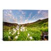 iCanvas Columbine Morning ll by Dan Ballard Photographic Print on Canvas