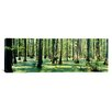 iCanvas Panoramic Cypress Trees Shawnee National Forest, Illinois Photographic Print on Canvas