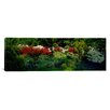 iCanvas Panoramic Flowers in a Garden Baltimore, Maryland Photographic Print on Canvas