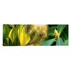 iCanvas Panoramic Close-up of Buds of Pine Tree Photographic Print on Canvas
