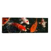 iCanvas Photography 'Koi Carp in Japan' Photographic Print on Canvas