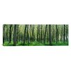 iCanvas Panoramic Forest Trail Chateau-Thierry France Photographic Print on Canvas