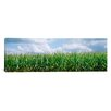 iCanvas Panoramic Clouds over a Corn Field, Illinois Photographic Print on Canvas
