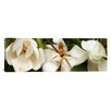 iCanvas Panoramic Close-up of Magnolia Flowers Photographic Print on Canvas