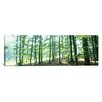 iCanvas Panoramic Forest Scene with Fog, Odenwald, Near Heidelberg, Germany Photographic Print on Canvas