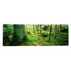 iCanvas Panoramic 'Close-up of Moss on a Tree Trunk in the Forest, Siggeboda, Smaland, Sweden' Photographic Print on Canvas