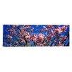 iCanvas Panoramic 'Magnolias, Golden Gate Park, San Francisco, California' Photographic Print on Canvas