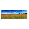iCanvas Panoramic 'Poppies in a Field, Norfolk, England' Photographic Print on Canvas