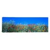 iCanvas Panoramic Poppy Field Tableland N Germany Photographic Print on Canvas