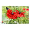 """iCanvas Decorative Art """"Poppies and Butterfly"""" by Bill Makinson Graphic Art on Wrapped Canvas"""