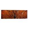 iCanvas Panoramic Maple Tree in Autumn, Vermont Photographic Print on Canvas