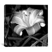 """iCanvas """"Lily of the Day"""" Canvas Wall Art by Harold Silverman - Flowers"""
