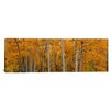 iCanvas Panoramic Quaking Aspens Dixie National Forest, Utah Photographic Print on Canvas
