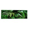 iCanvas Panoramic 'Palm Fronds and Green Vegetation, Seychelles' Photographic Print on Canvas