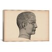 iCanvas Cartography 'Phrenology Human Head' Graphic Art on Canvas