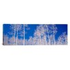 iCanvas Panoramic Forest, Utah Photographic Print on Canvas