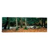 iCanvas Panoramic White Mountain National Forest, New Hampshire Photographic Print on Canvas