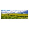 iCanvas Panoramic Road, Canola Field, Washington State Photographic Print on Canvas
