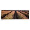 iCanvas Panoramic Rows Lavender Field, Pays De Sault Provence, France Photographic Print on Canvas
