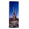 iCanvas Panoramic 'Saguaro National Park, Tucson, Arizona' Photographic Print on Canvas