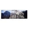 iCanvas Panoramic Yosemite National Park, California Photographic Print on Canvas
