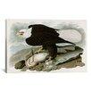 iCanvas 'White-Headed Eagle' by John James Audubon Graphic Art on Canvas