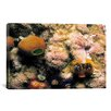 iCanvas Marine and Ocean 'Spiral Coral' Photographic Print on Canvas